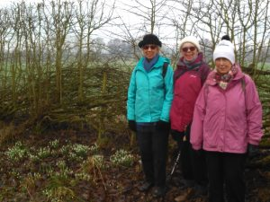 Strollers and Snowdrops